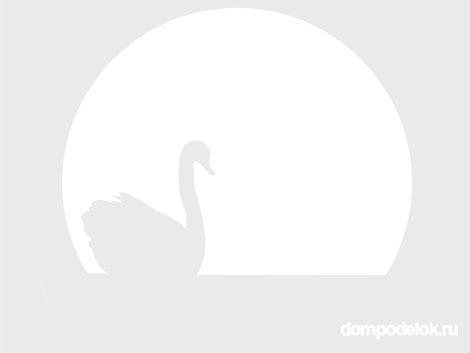 лебедя (его)