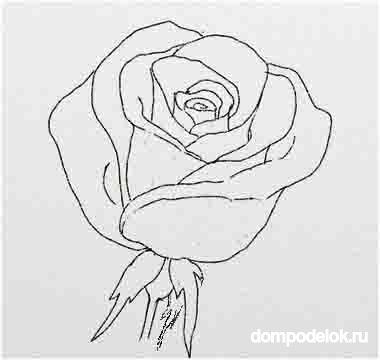 Розы нарисовать своими руками