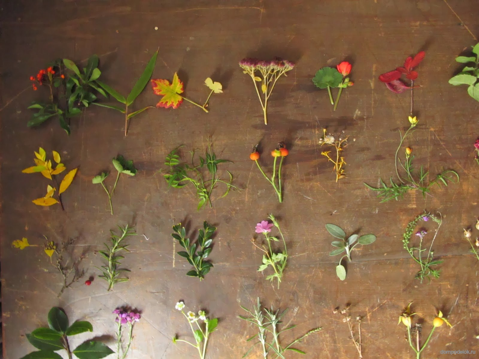 Как сделать гербарий своими руками? Гербарий